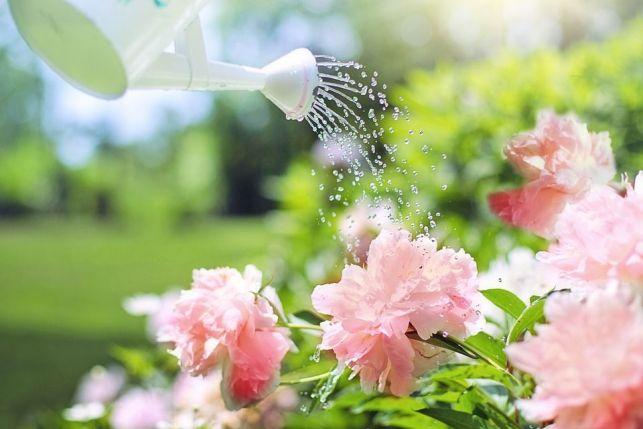 Un jardin parfumé