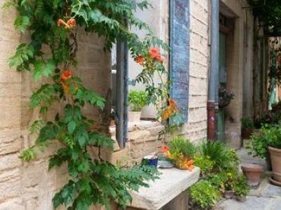Les plantes grimpantes pour recouvrir un mur