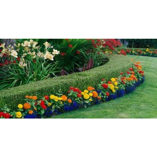 Une haie de jardin fleurie quels arbustes quels fleurs - Haie fleurie toute l annee ...