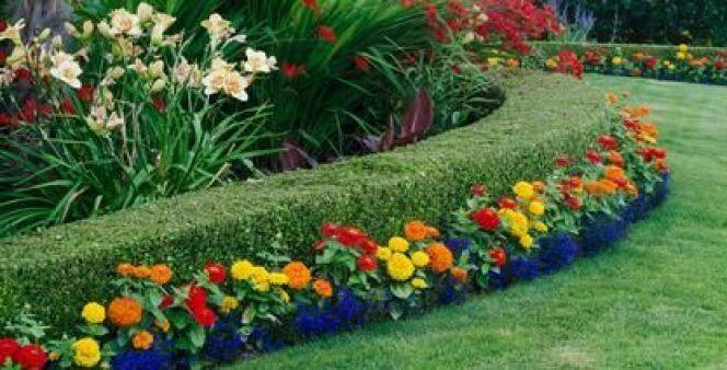 Une haie de jardin fleurie quels arbustes quels fleurs