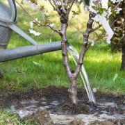 Utiliser de la chaux dans un jardin